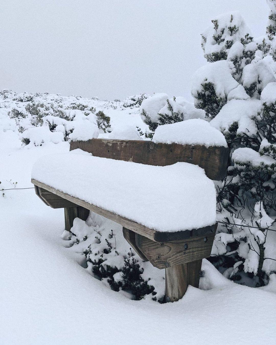 snow Hartz Mountains National Park TAS 15MAY21 1 @grace.wherrett snow